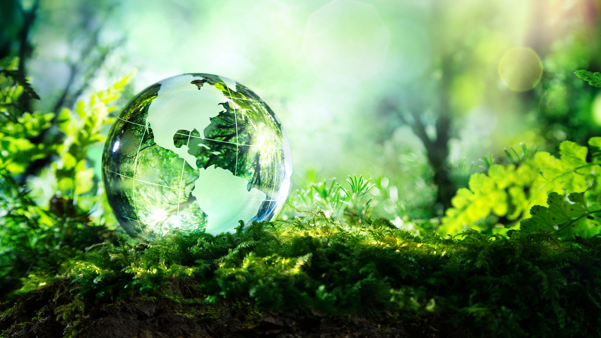 Environmental-law-trees-green-globe-earth-glass-green-grass-climate-change